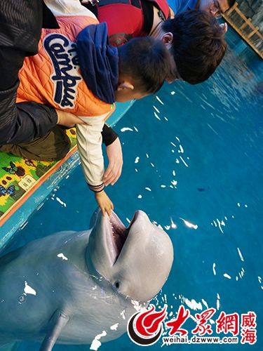 威海神游海洋世界成立自闭症儿童辅助治疗中心